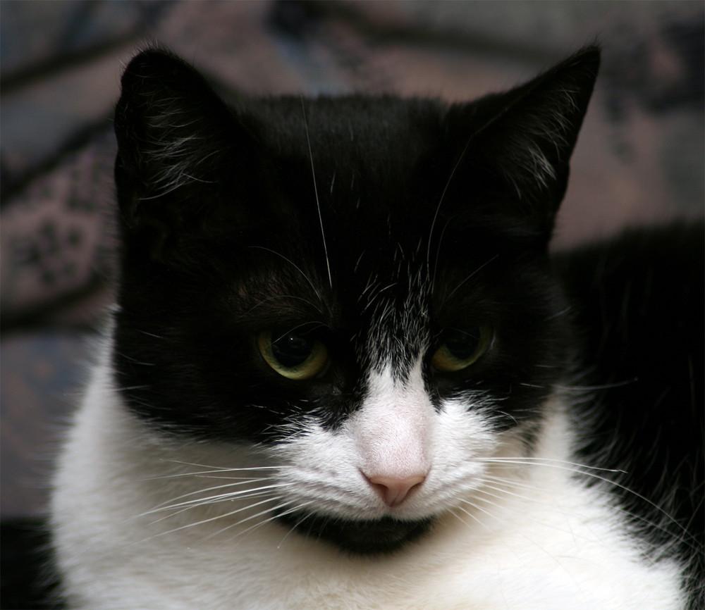 interessierter Katzenblick