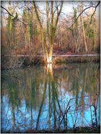 INTERMEDE - 9 - - Bois Notre Dame en Hiver .