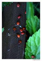 Internationales Käfertreffen in Weidling bei Klosterneuburg