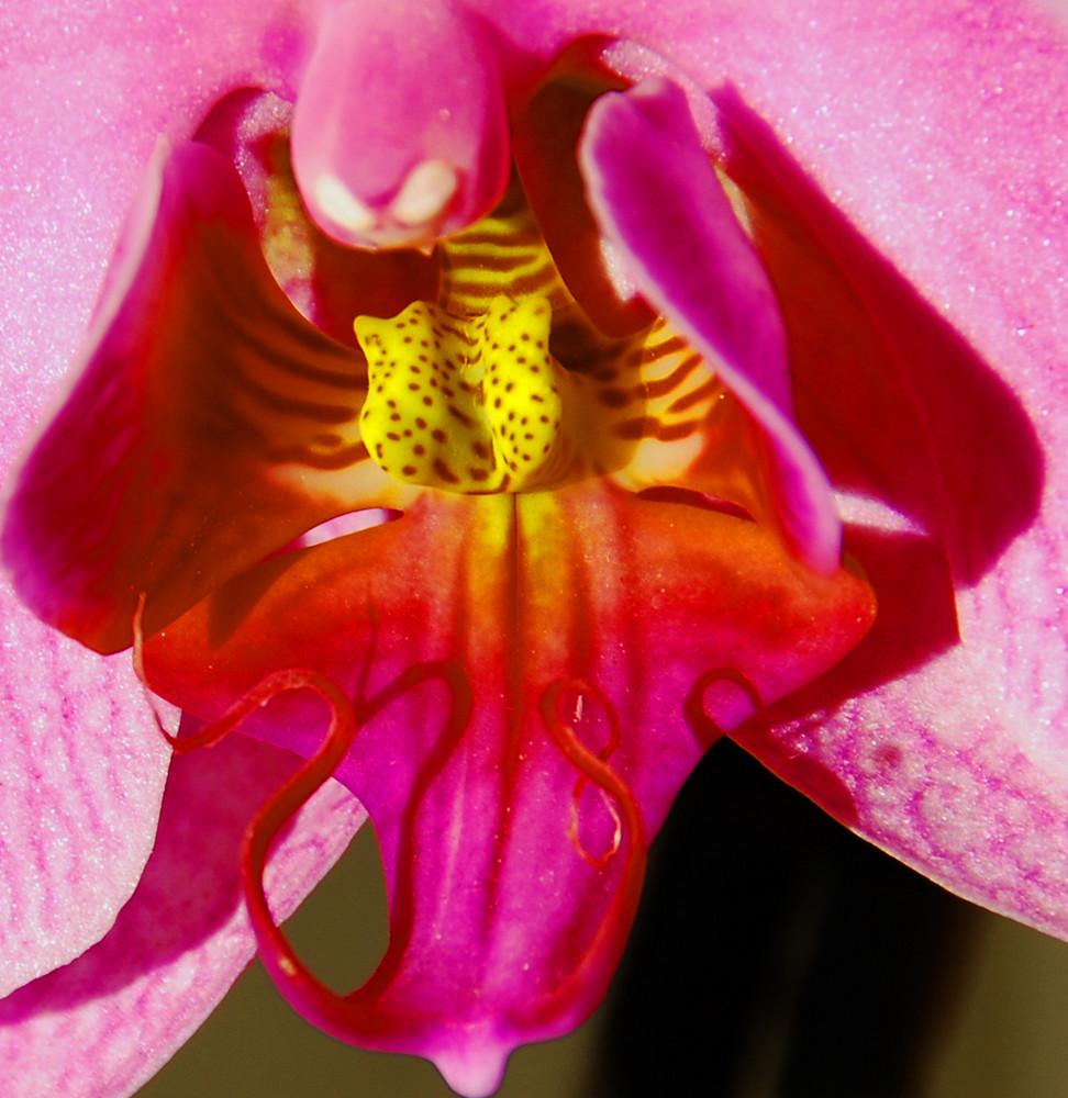 interno di orchidea