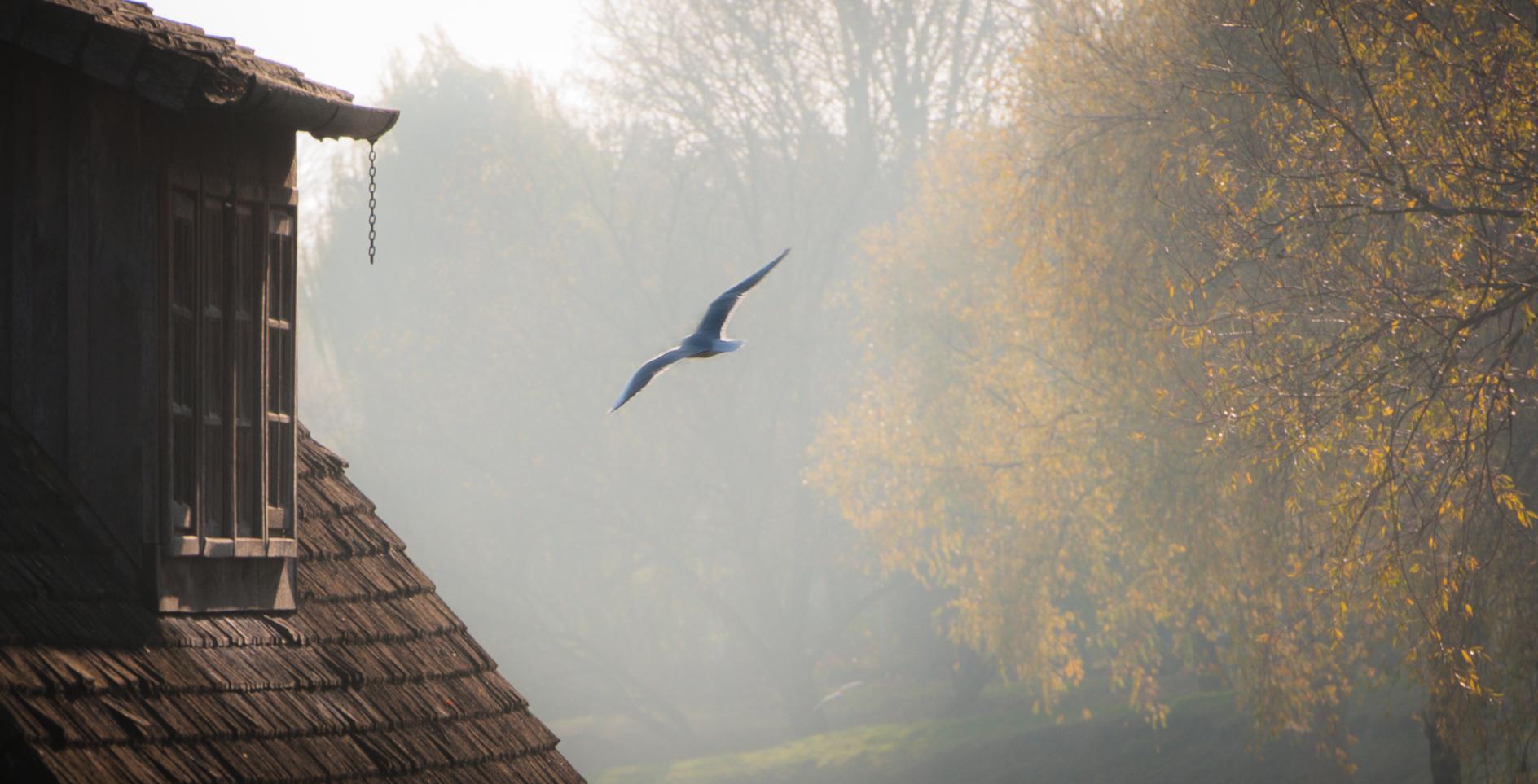 into the foggy light #2