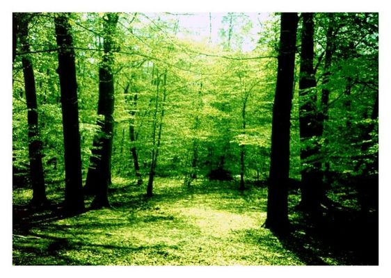 ...into the forest...