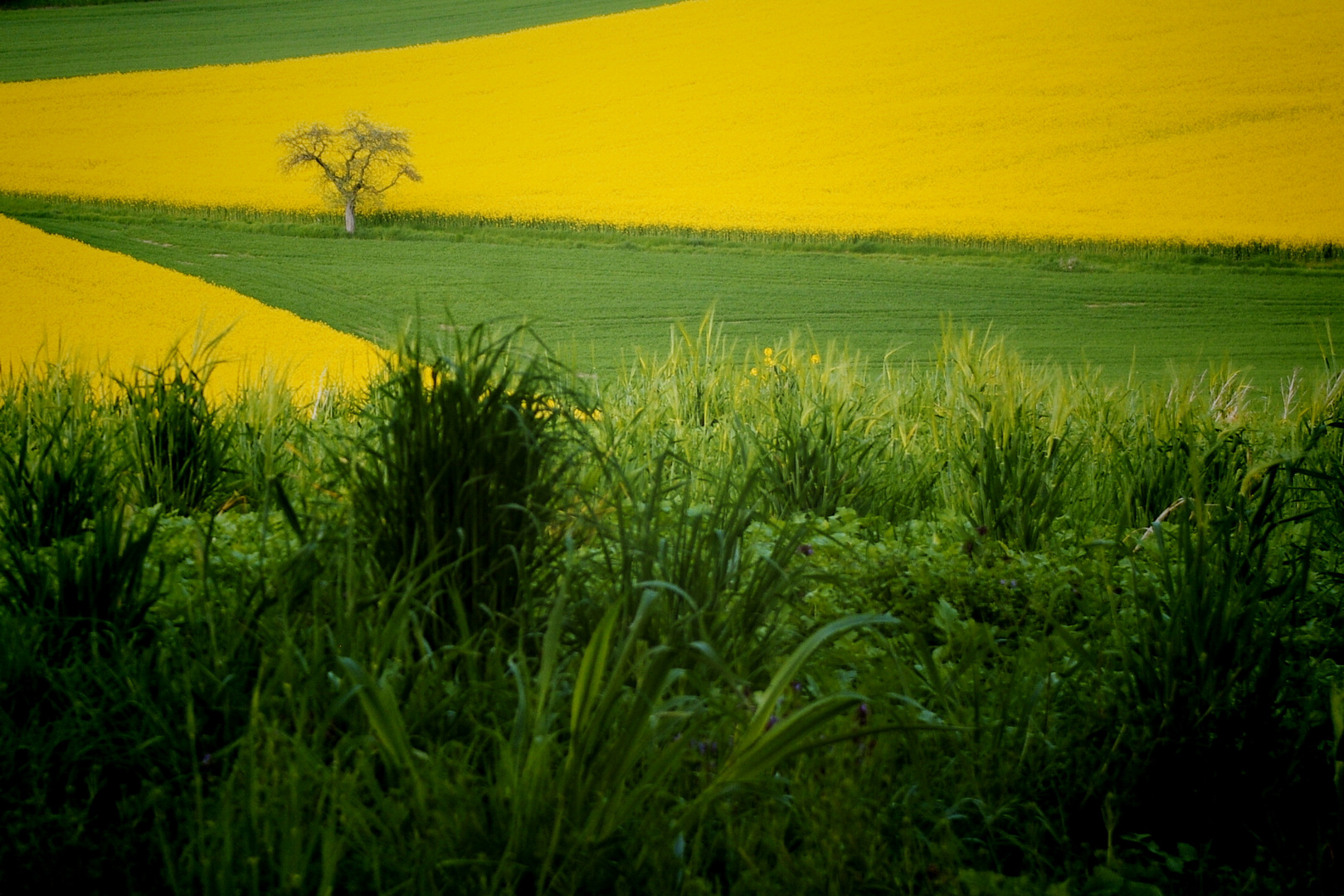 into the yellow & green