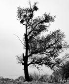invalid tree