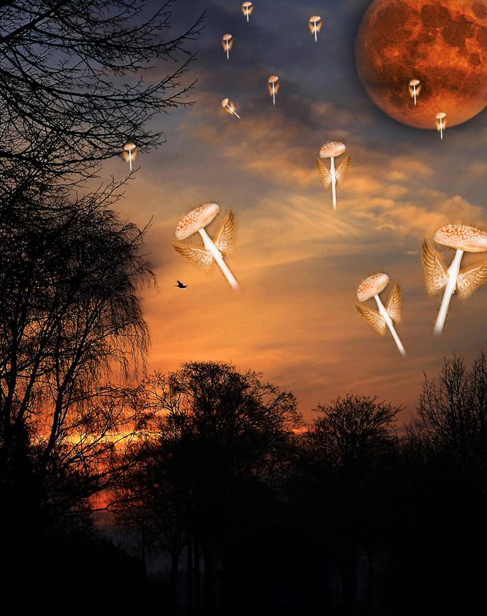 Invasion der Feuerfliegenpilze