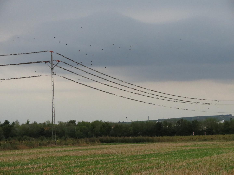 Invasion der Vögel oder was hält eine Stromleitung aus.