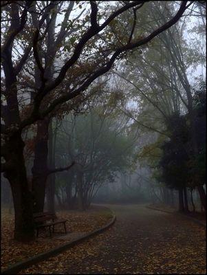 Inverno al parco.