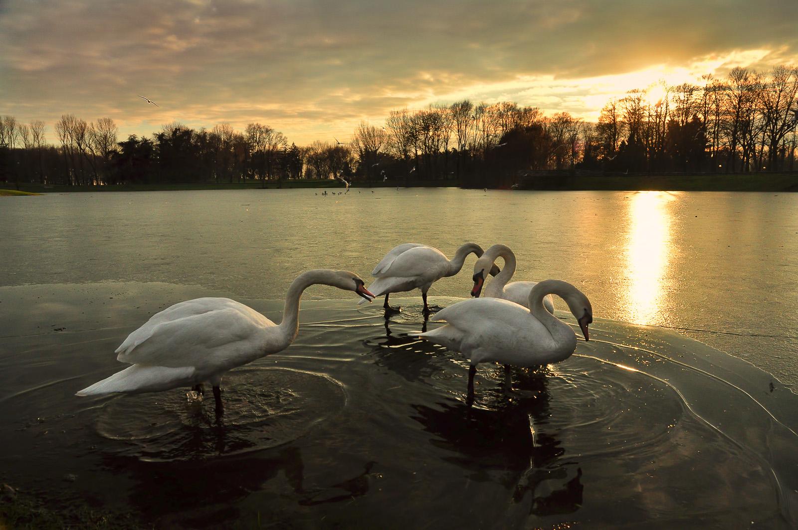 Inverno al Parco Forlaini