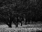 inverno al parco lambro - milano