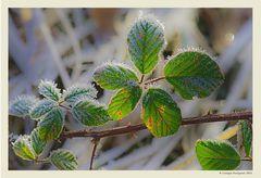 Inverno - Dettagli # 1