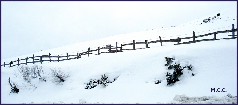 Invierno de nieves, año de bienes.