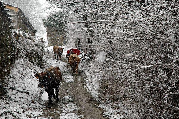 invierno en Aller