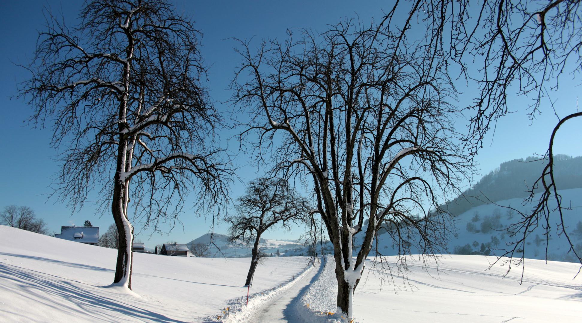 Invierno / L'hiver / Winter....01