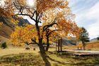 Invitation à une randonnée d'automne