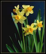 Io......Narciso!