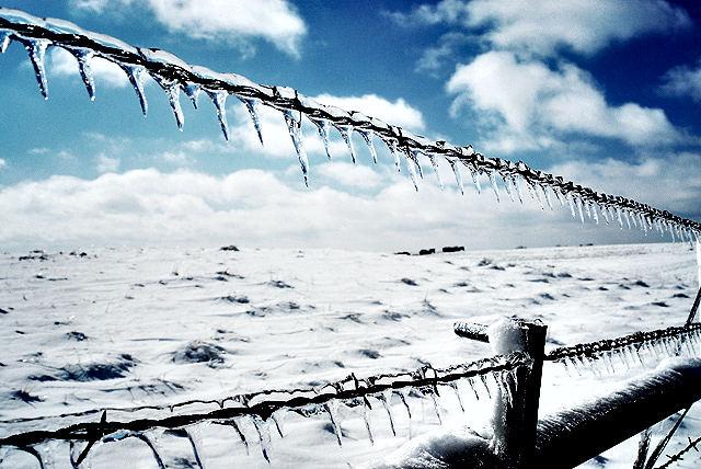Iowa Farm Fence