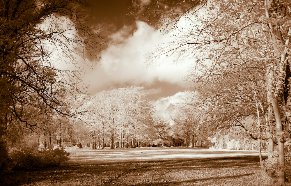 IR Autumn Forest Pano