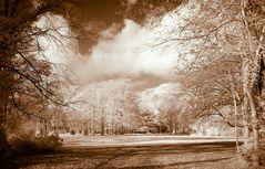 IR Autumn Forest Pano