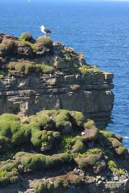 Irelands Coast