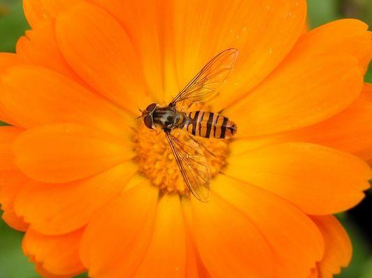 Irgend nen Insekt auf irgend ner Blume :)