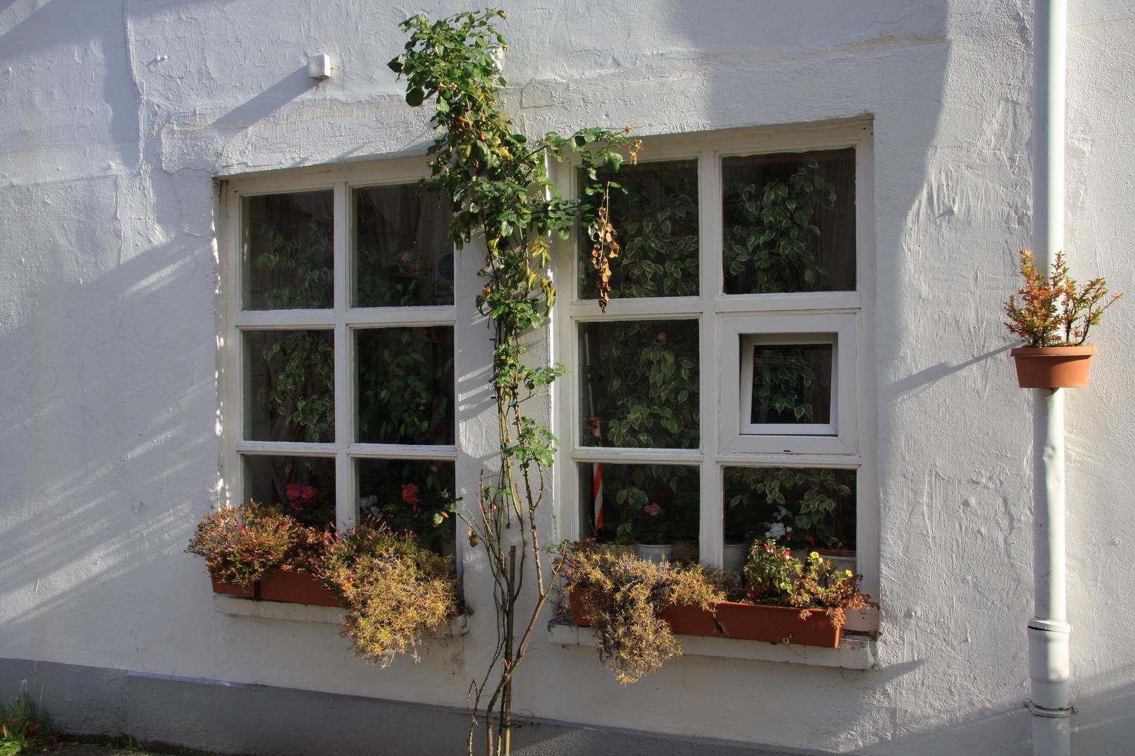... irgendein Fenster