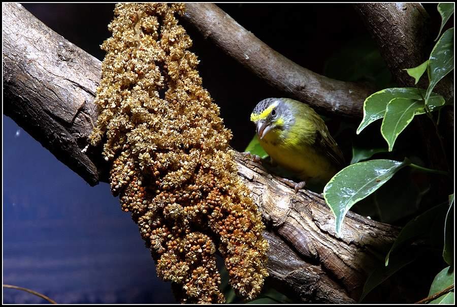 irgendein Vögelchen
