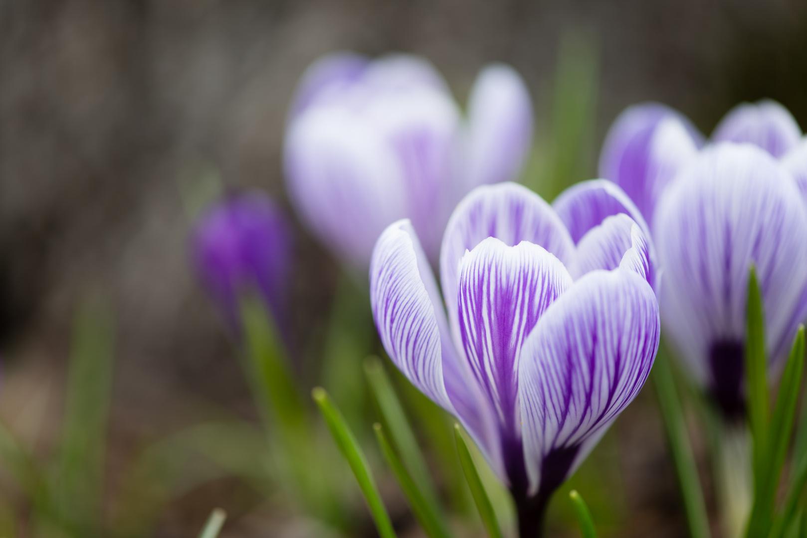 Irgendwann kommt schon der Frühling...