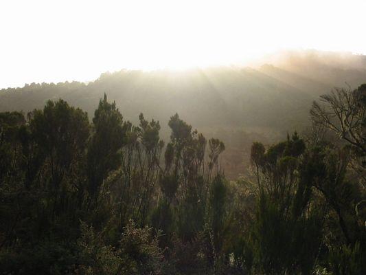 Irgendwo am Kilimanjaro