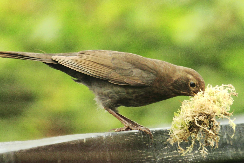 irgendwo hier muss das Nest doch sein