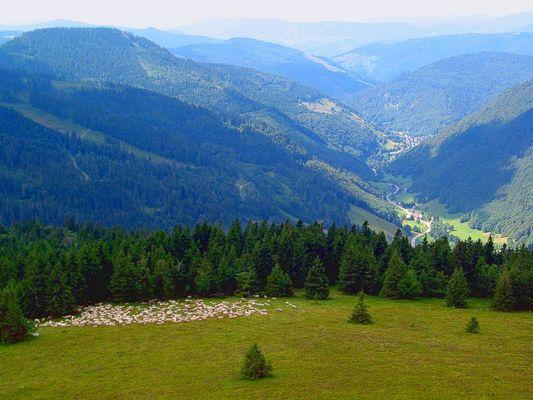 Irgendwo im Hochschwarzwald
