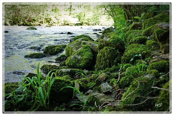 Irgendwo im Schwarzwald . . . . Gutach