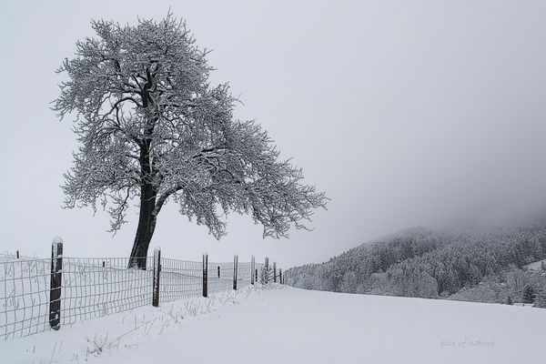 irgendwo im Winterland