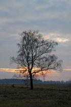 Irgendwo in Brandenburg, 28.11.10 – 09