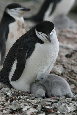 Irgendwo in der Antarctis