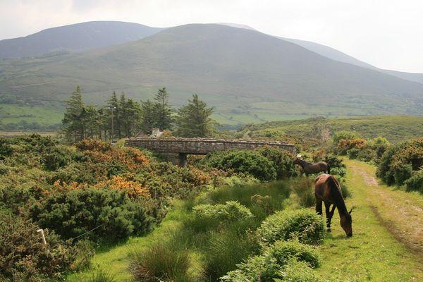 Irgendwo in Irland
