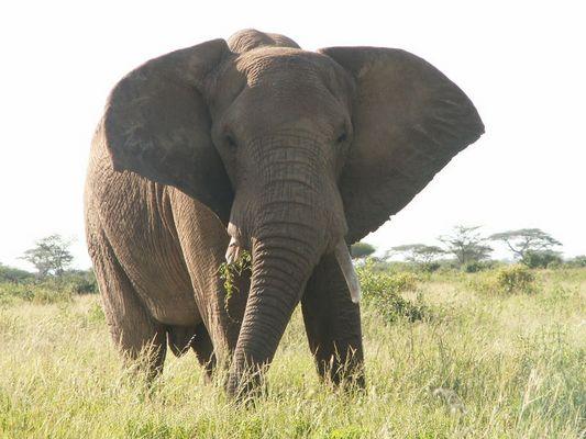 Irgendwo in Kenia I