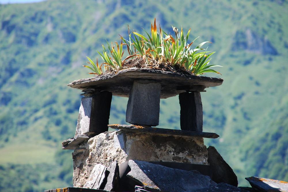 Iris de cheminée
