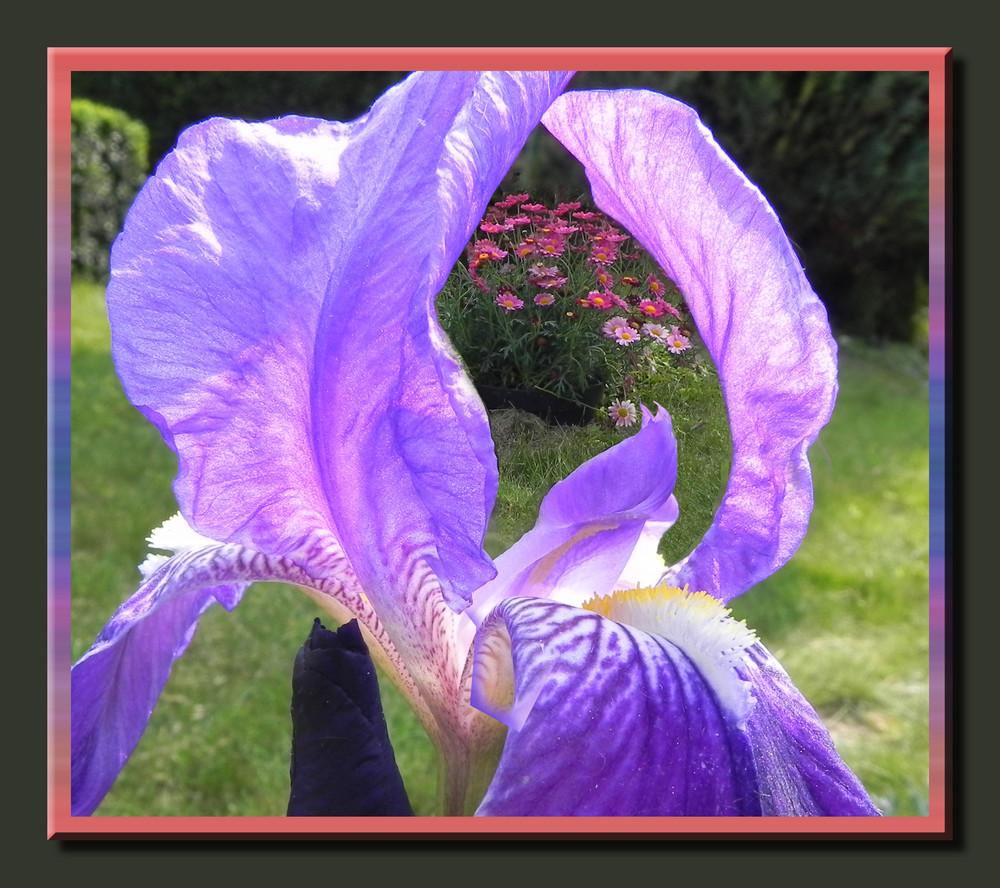 Iris et Anthémis