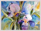 Iris in violett