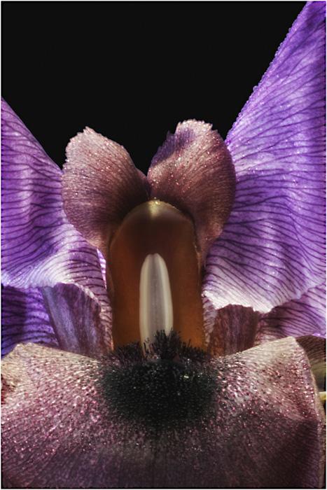 Iris intime.....