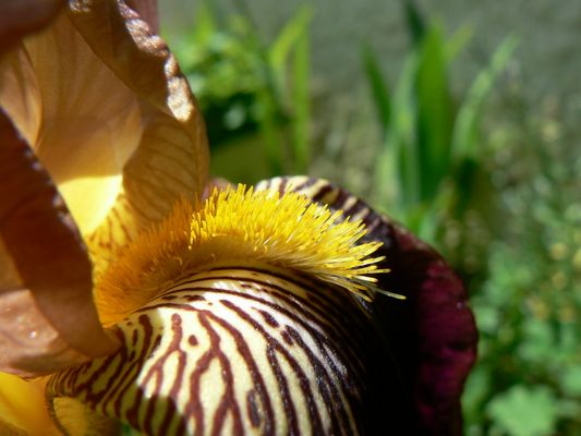 Iris punk