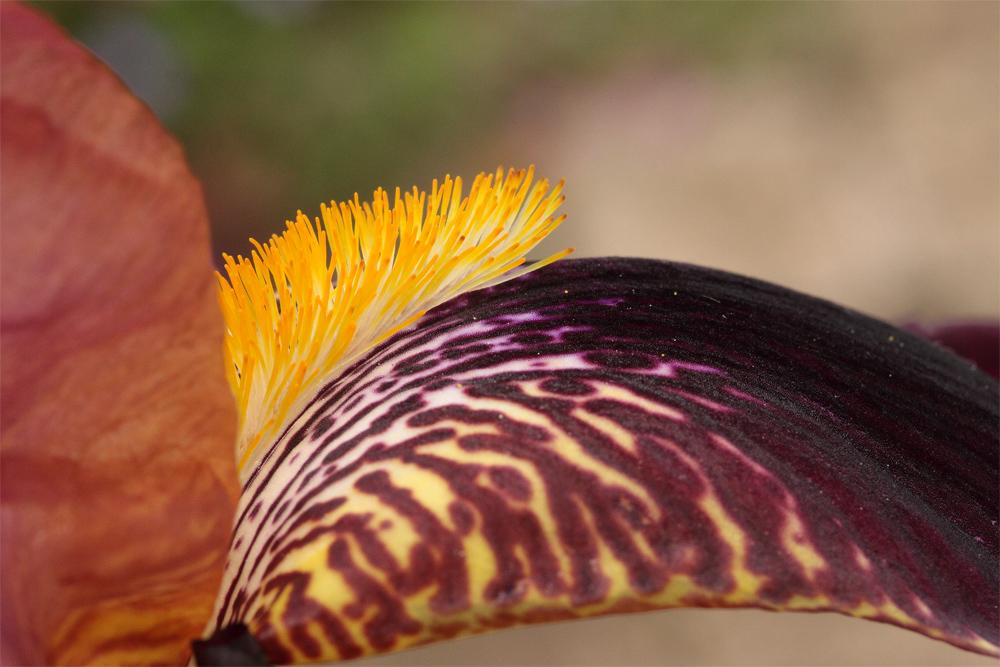 Iris punk ;-)))