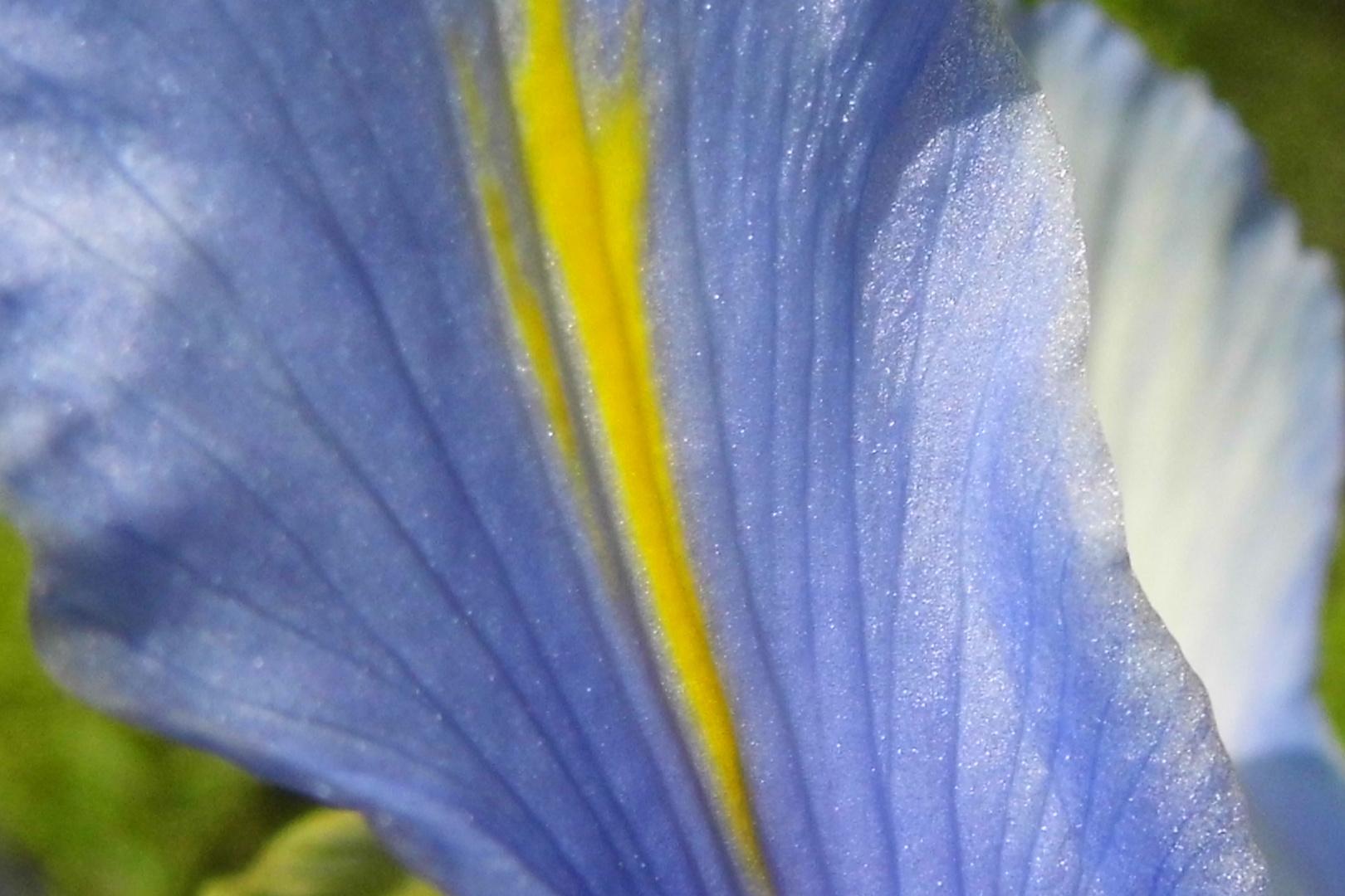 Irisblatt