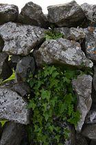 Irische Mauern....