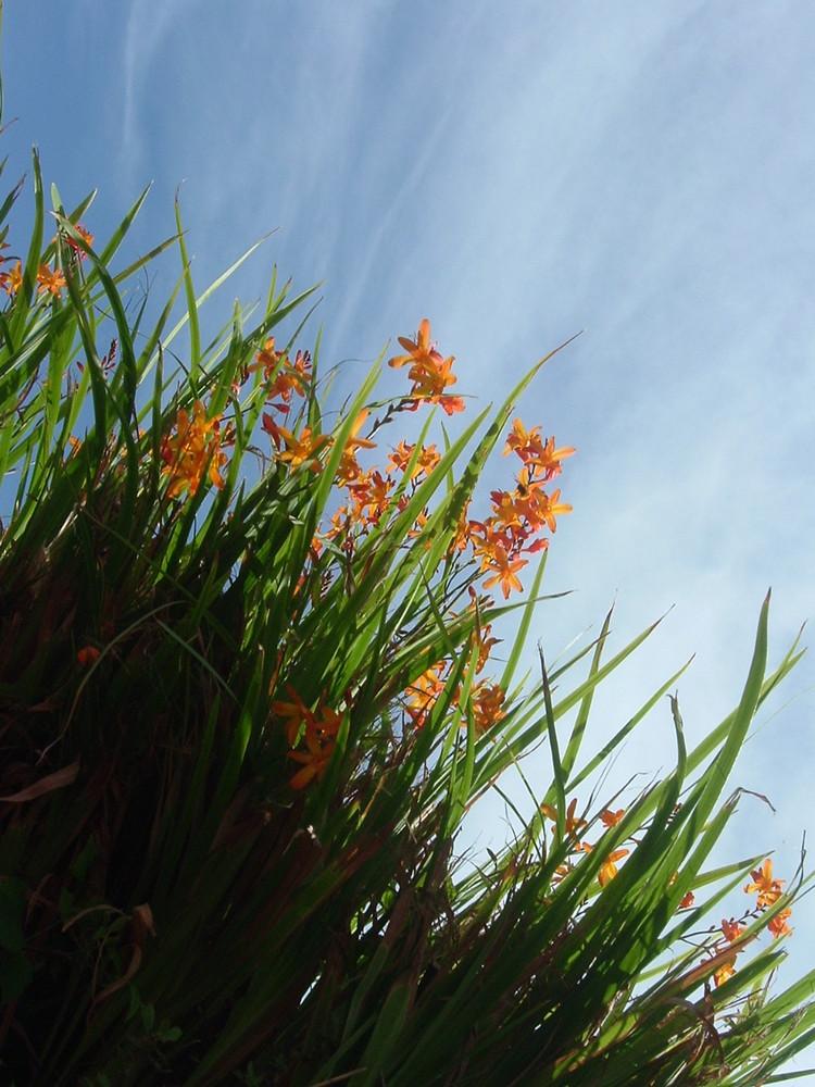 irish-orange
