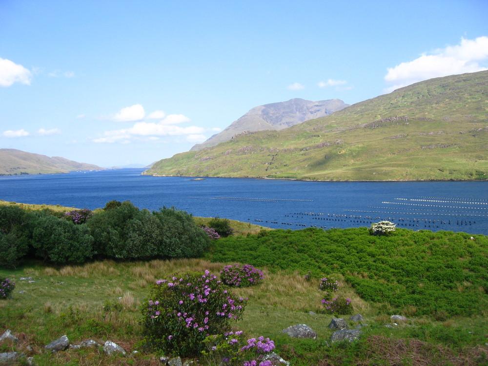 Irland 2008 im Mai