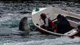 Irland 2011 - VIII - Fungie, der Delfin von Dingle von Norbert Pilters