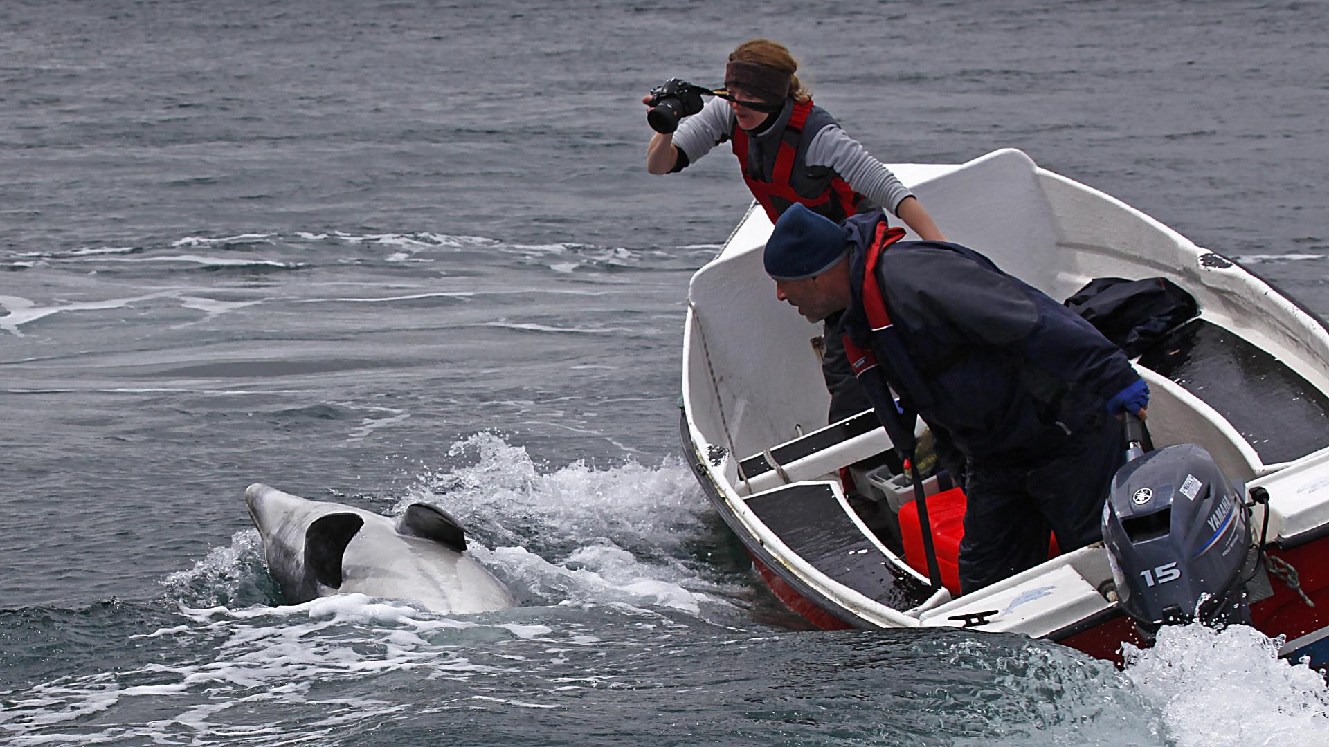 Irland 2011 - XI - Fungie, der Delfin von Dingle