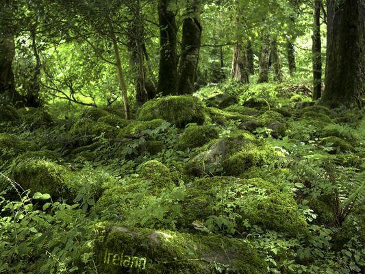 Irland - Grüne Hölle