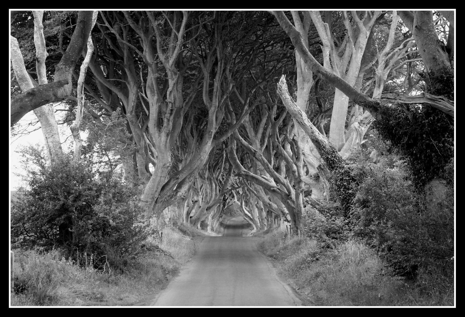 Irland VIII